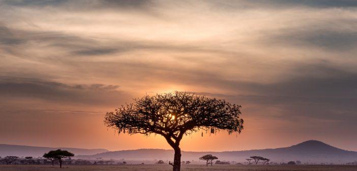 África: el viaje. Vida, belleza y hospitalidad infinitas. 11 – 28 octubre 2019